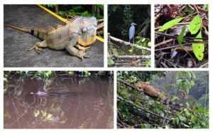 Reptiles y Bichitos